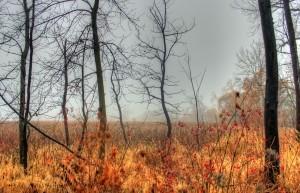 misty-marsh-1435227-m